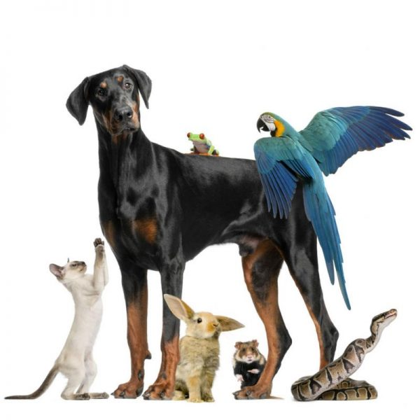 dog-with -small-pets